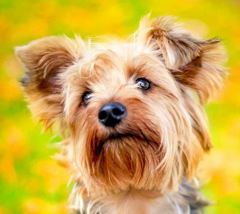 pexels-photo dog